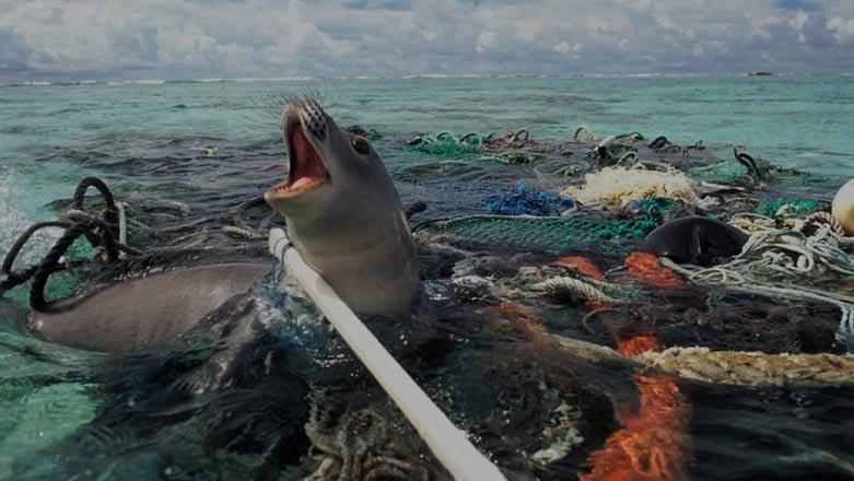 Mancha de lixo do Pacífico e portas de saída, imagem de uma foca presa a rede
