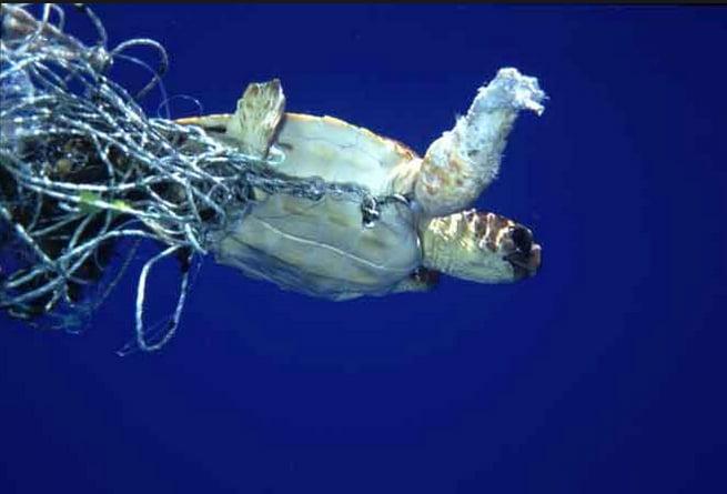 Mancha de lixo do Pacífico e portas de saída, imagem de tartaruga presa em rede