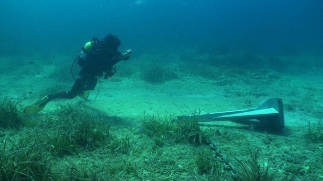 a maior planta marinha do mundo