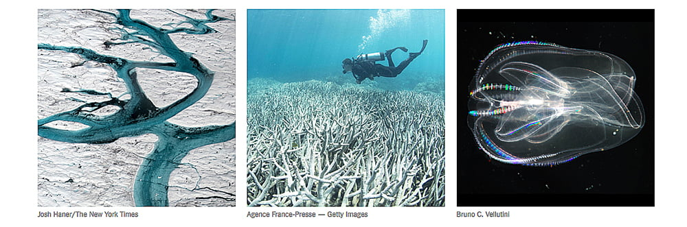 Oceanos absorvem excesso de calor, imagem de corais brenqueados