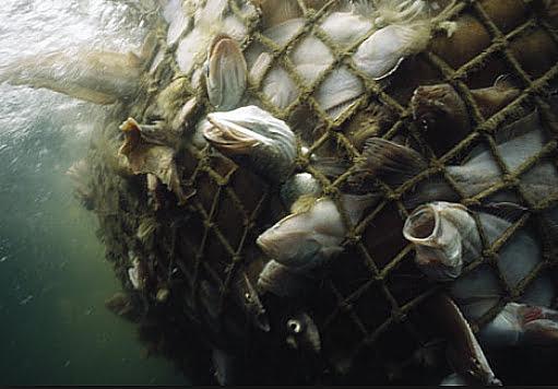 Subsídios à pesca no mundo: insustentáveis,