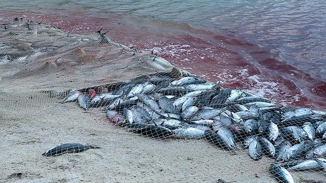 Subsídios à pesca no Brasil do PT: insustentáveis