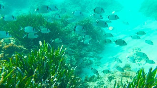 A maior planta marinha do mundo está desaparecendo
