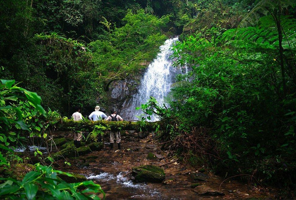 RPPN Salto Morato, imagdem de cachoeira na mata atlântica
