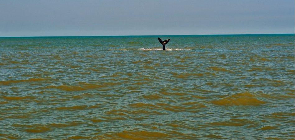 Ecoturismo Marinho, imagem de cauda-de-baleia-franca