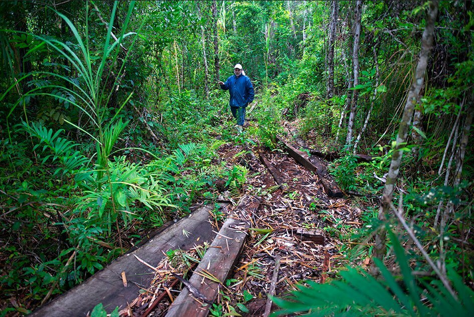 Riscos ao Lagamar, imagem de desmatamento na APA federal marinha Cananéia - Iguape- Peruíbe