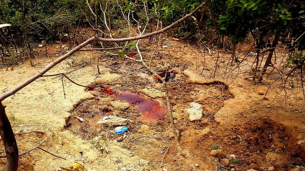 APA/ESEC Guapimirim, imagem de-chorume-no mangue
