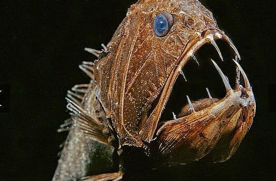 Criaturas marinhas bizarras são descobertas
