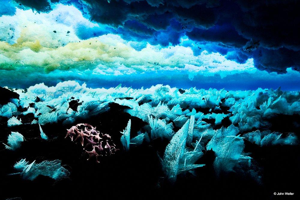 Mar de Ross, imagen de estrelas-do-mar na anteartica