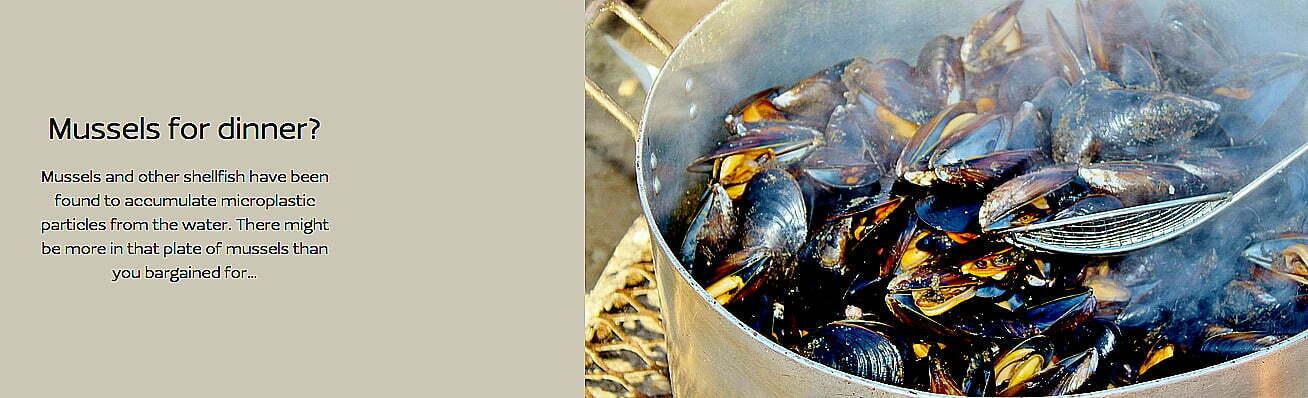imagem de mariscos-contaminadios-
