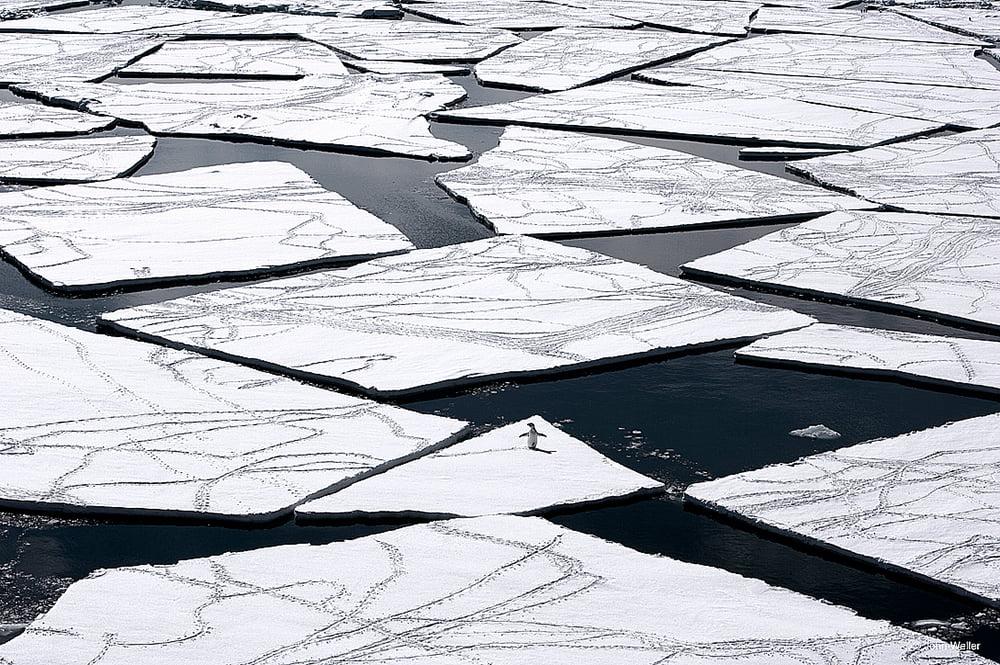 Mar de Ross, imagem de placas-de-gelo-e-pinguim