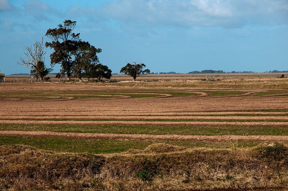 licenciamento ambiental, imagem de cultura de arroz no rio grande do sul