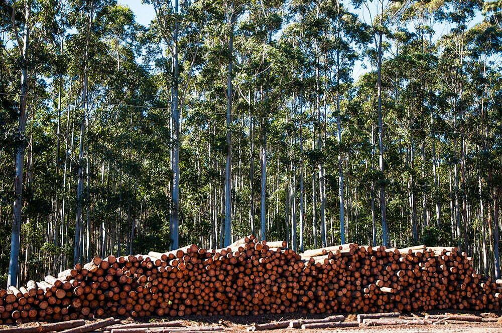 licenciamento ambiental, imagem de refrescamento com pinnus, rs