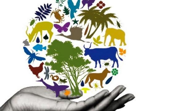 Ambientalistas no Brasil, uma visão crítica