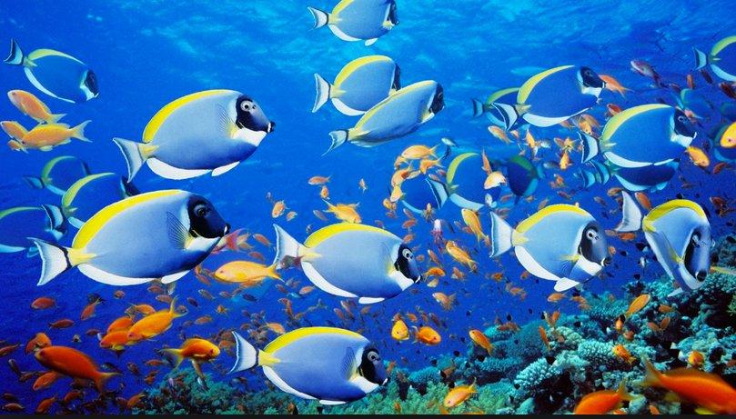 Ambientalistas, imagem de vários peixes coloridos num recife
