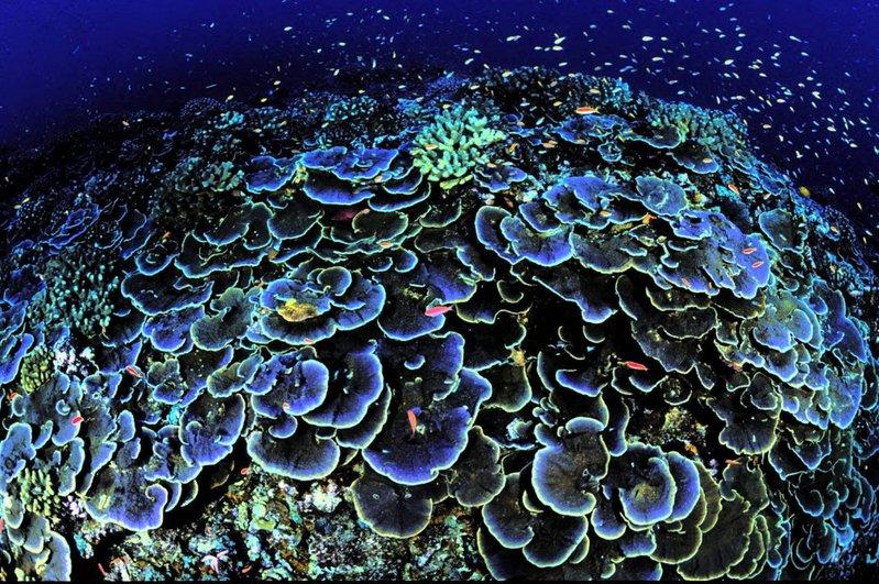 corais e aquecimento global, imagem de corais