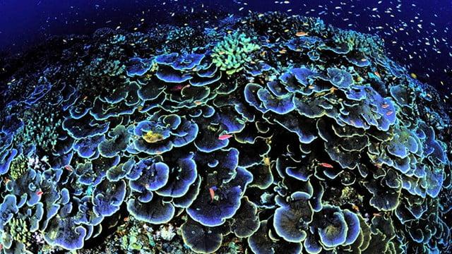 Corais e aquecimento global