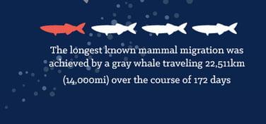curiosidades sobre os oceanos