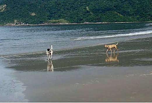 cães nas praias, imagens de cães em praias