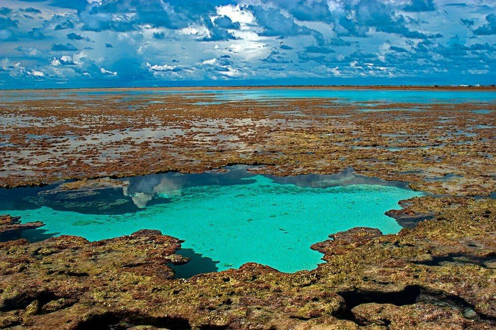 Atol das Rocas, corais no atol das rocas