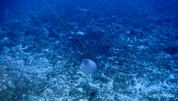 Corais na Amazônia nova surpresa marinha