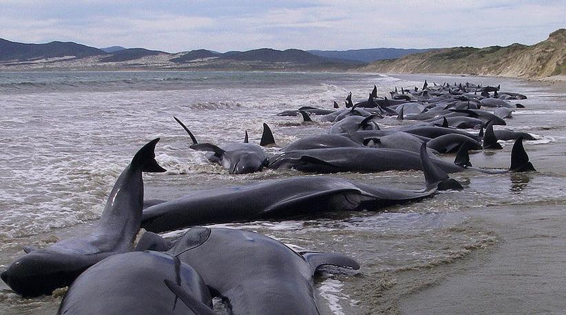 imagem de baleias mortas em praia