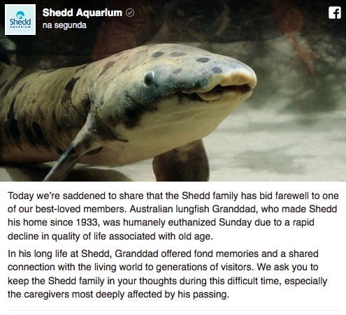 necrológio de um peixe, imagem de um peixe pulmonado