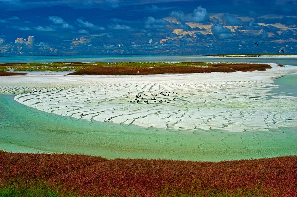 Atol das Rocas, imagem de aves no atol das rocas