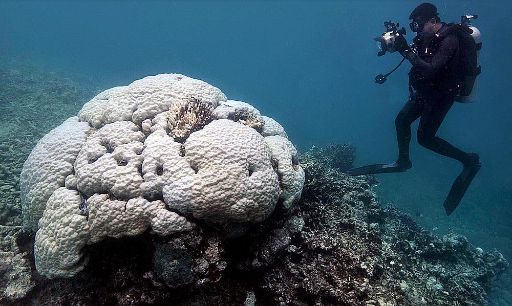 grande barreira de corais, imagem de branqueamento de corais
