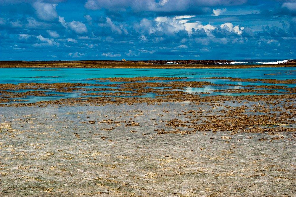 proteção à corais, imagem de Corais no Atol das Rocas