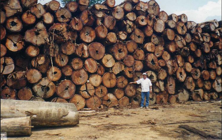 Ambientalistas e ruralistas, imagem de toras de madeira empilhadas
