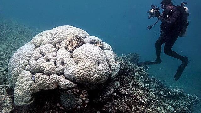 Grande Barreira de Corais, morta?