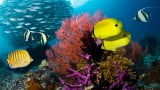Corais de Raja Ampat: naufrágio e prejuízos