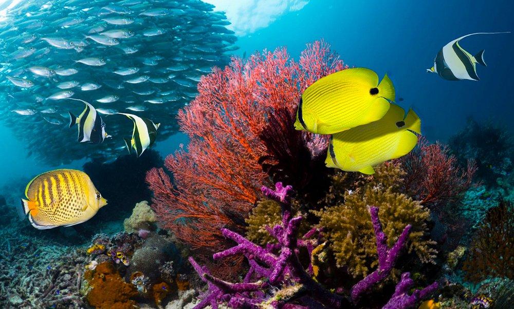 corais de raja ampat, imagem de corais de raja ampat