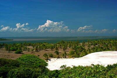 Dez motivos para conhecer o melhor da costa brasileira, imagem de mangue seco