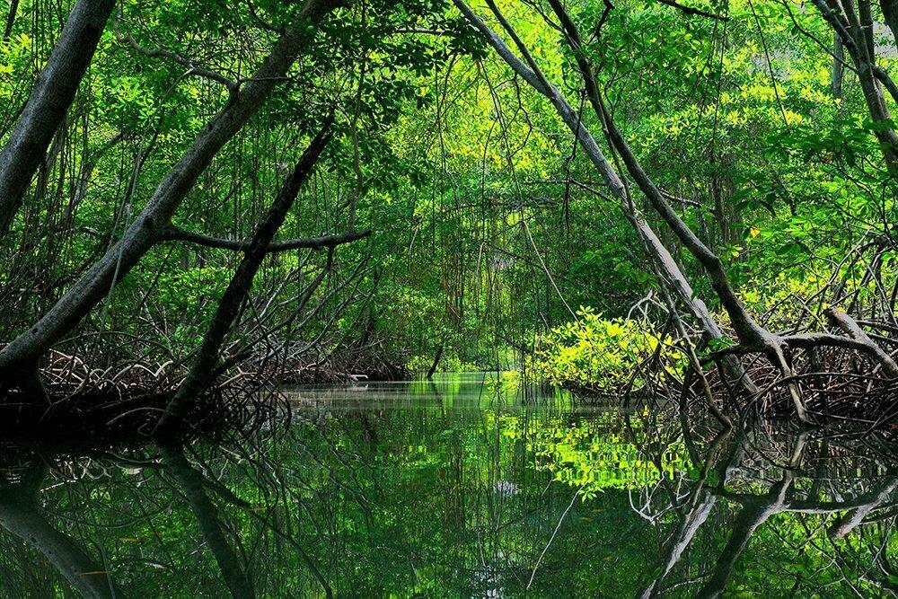 Código Florestal imagem de manguezal