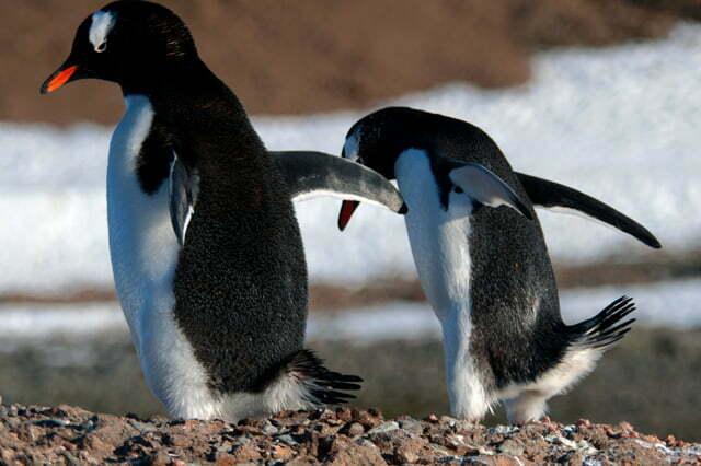 imagem de pinguins