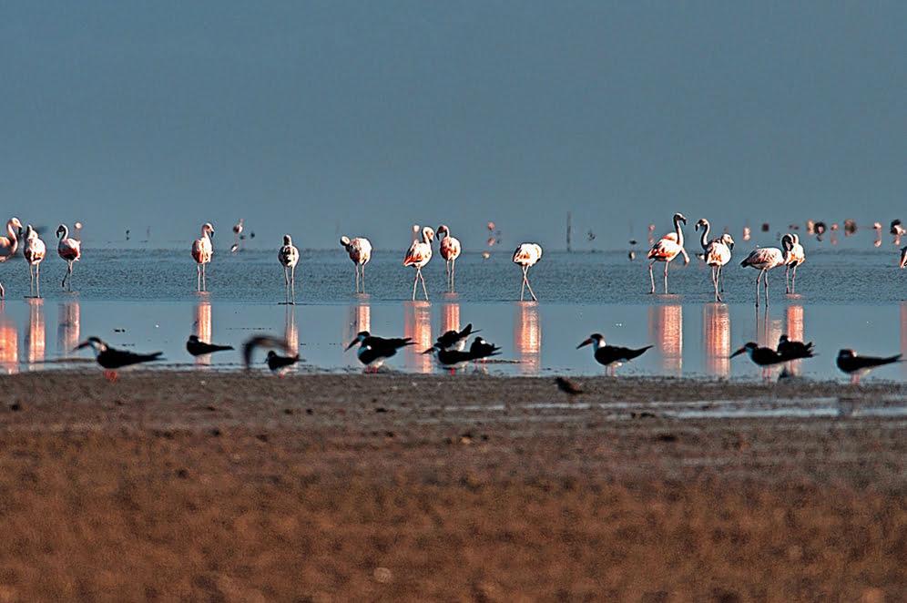 Parque Nacional da Lagoa do Peixe, RS, imagem de flamingos