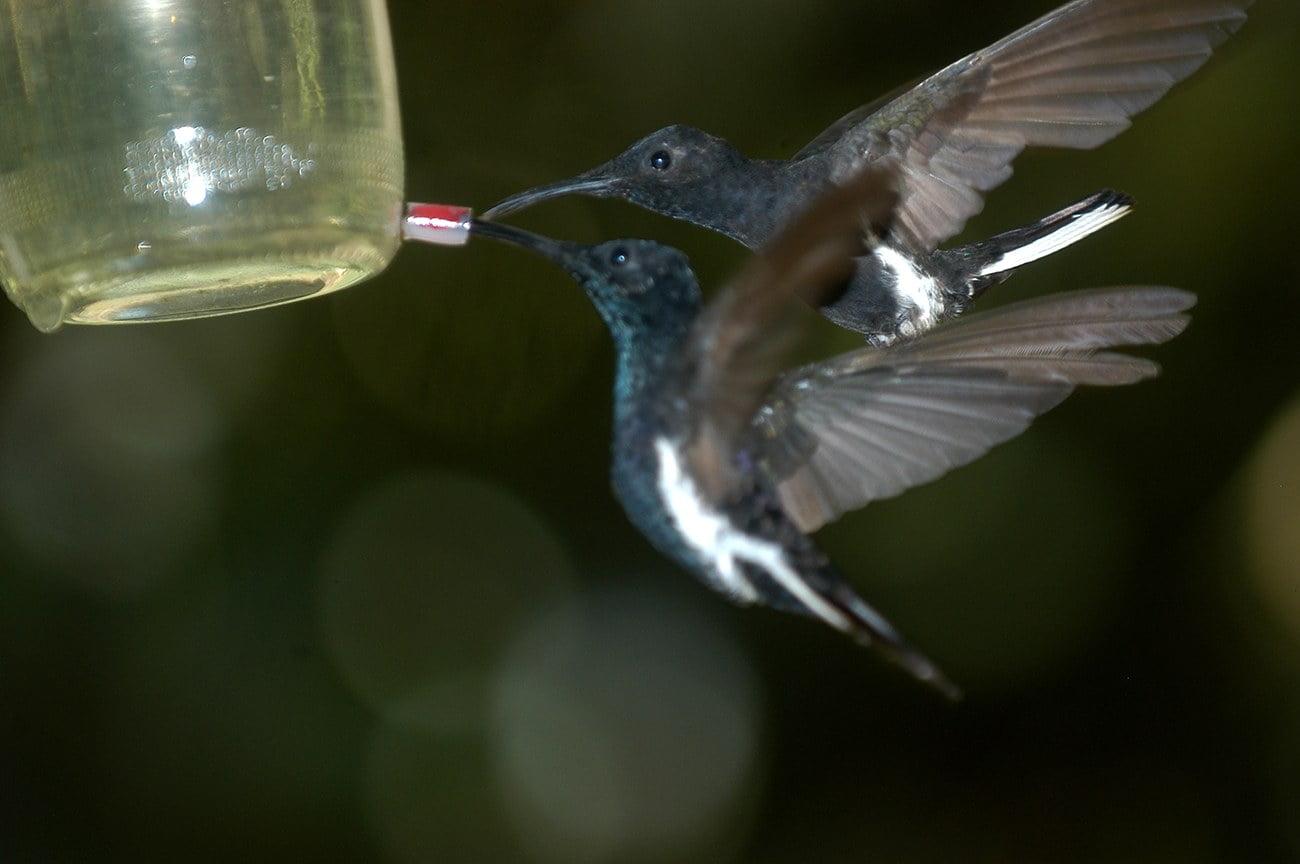 imagem de beija flor e bebedouro de água