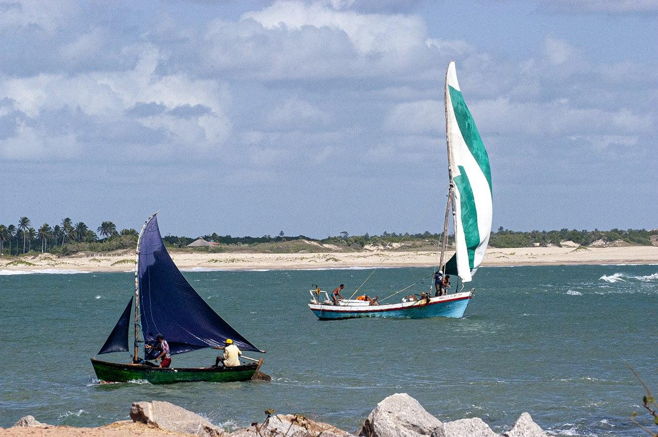 imagem de bote-bastardo no litoral do Ceará