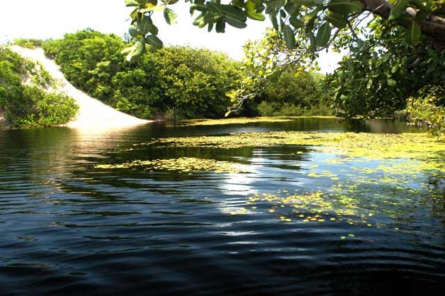 Resultado de imagem para retentor natural de água e sujeira