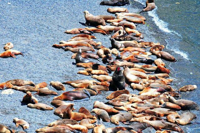 Colônia de lobos marinhos