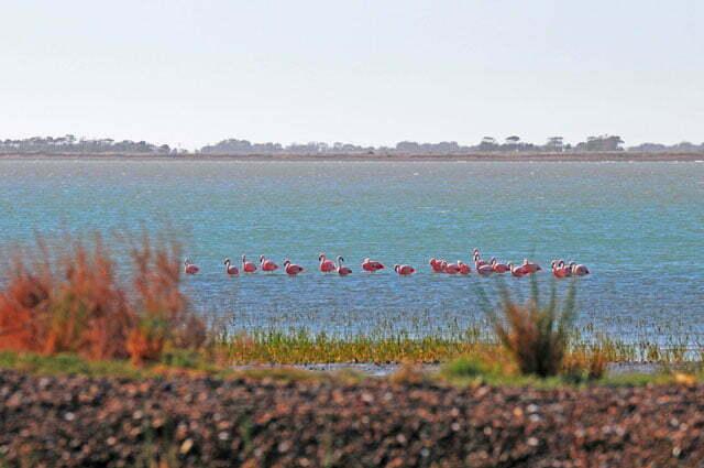 xiii, flamingos...