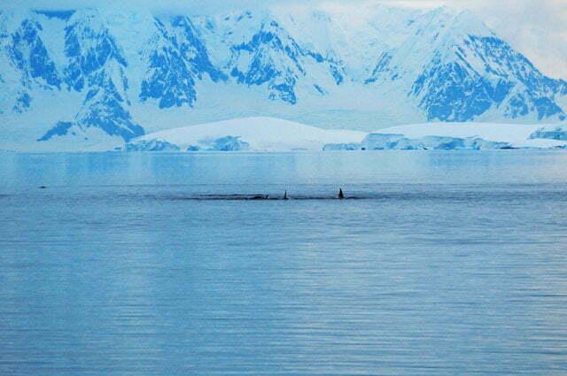 Baleias no estreito de Gerlache