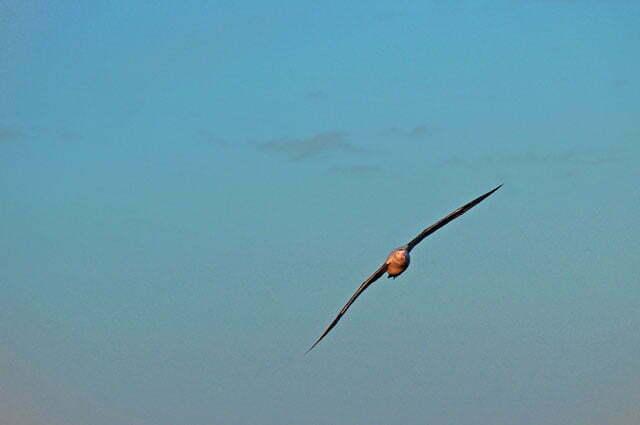 Ainda o albatroz...