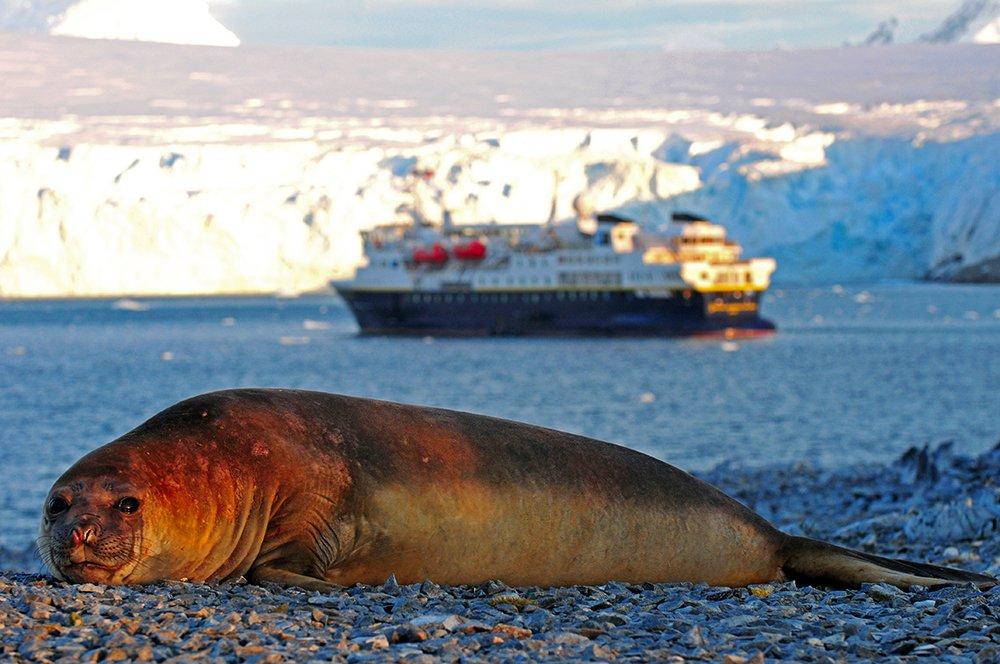 Viagem à Antártica, das Ilhas Argentinas até a Ilha Trinity, imagem de elefante marinho e navio