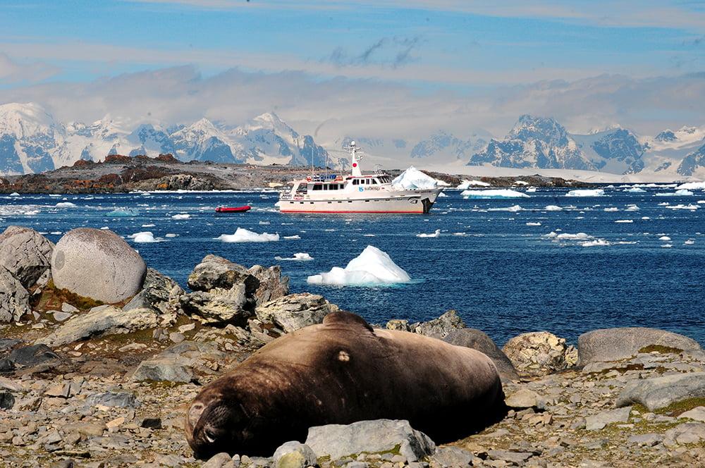 Viagem à Antártica, das Ilhas Argentinas até a Ilha Trinity, imagem do Mar Sem Fim na Antártica