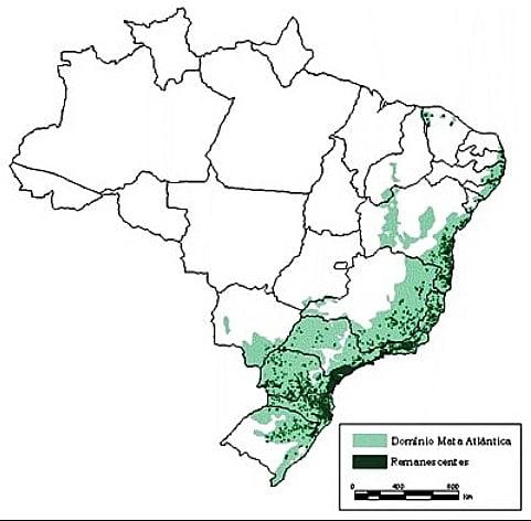Desmatamento na Mata Atlântica, ilustração de mata atlântica no Brasil