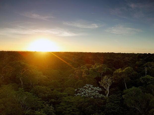 Pólen da Mata Atlântica pode ajudar a prever impacto climático, imagem de Reserva ambiental no Espírito Santo