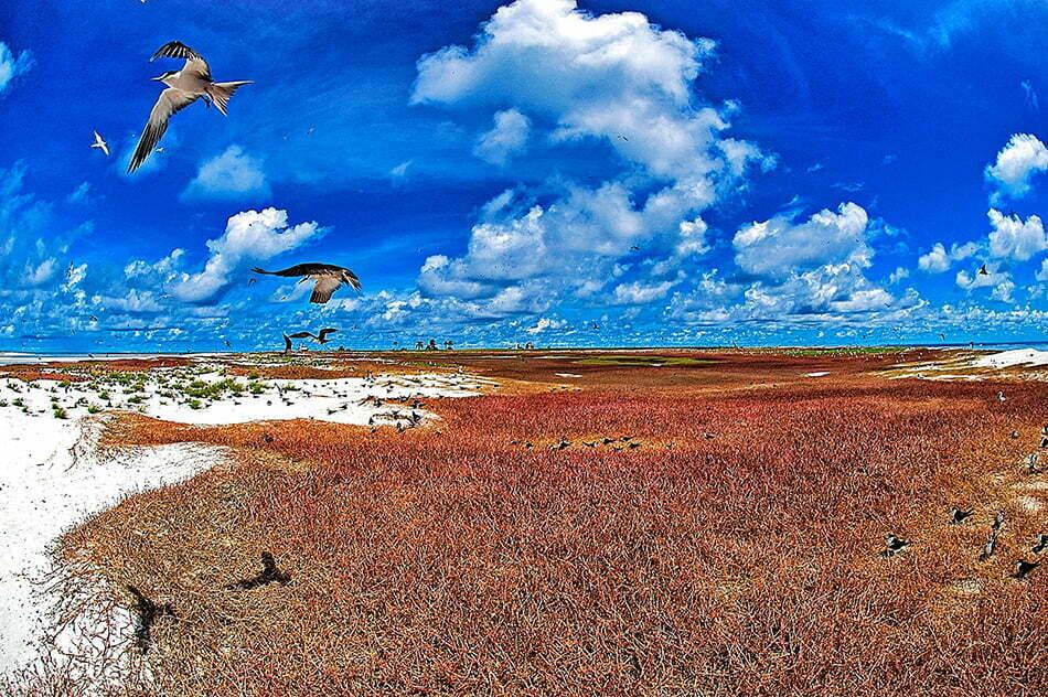 Viagens do Mar Sem Fim em fotos. Nº 2, imagens do O Atol das Rocas é um dos maiores ninhais de aves do Atlântico Sul.